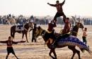 kid-standson-horse-in-international-festival-of-the-sahara
