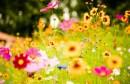 fleurs-hd-wallpaper-1280x800
